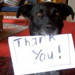 thank you from dog